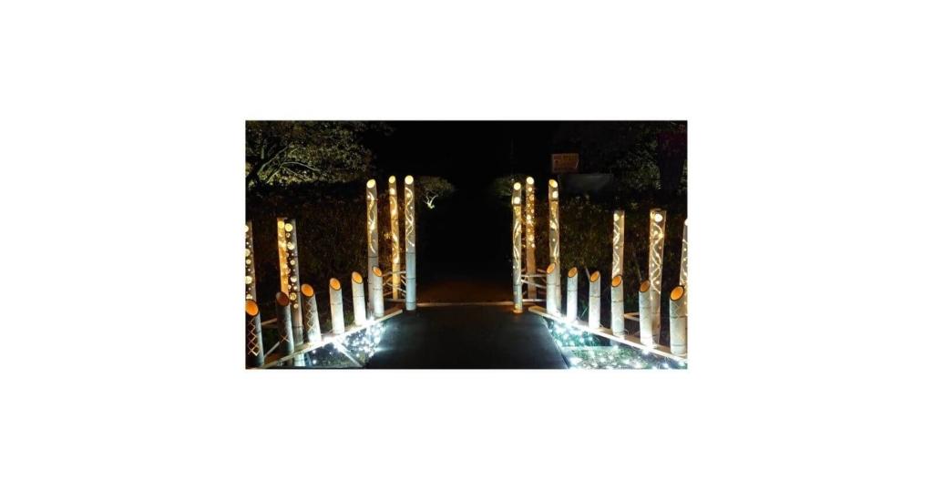 河津桜まつり光る竹