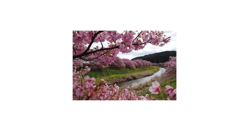 河津桜並木道
